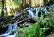 Hiking Water Filter
