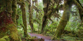 Washington Hiking Trail