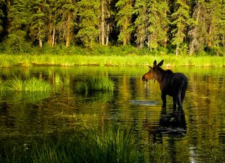 Best Hikes in Alaska